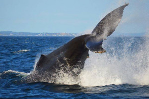 Puget Sound Express - whale watching excursions