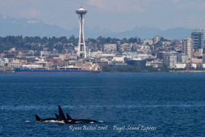 Puget Sound Express - whale watching day trips