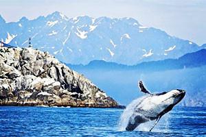 USA River Cruises - Luxury Island Cruises