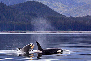 USA River Cruises - see whales on our adventures