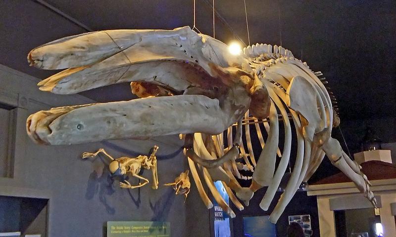 San Juan Island Whale Museum