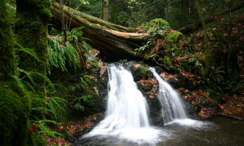 Language In 45 And 47 Stella Street: Picnic Area To Cascade Falls