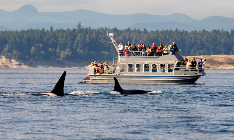 Whale Watching Tour near Victoria BC
